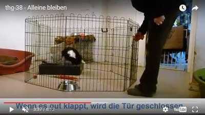 Traumhund generator claudia hußmann